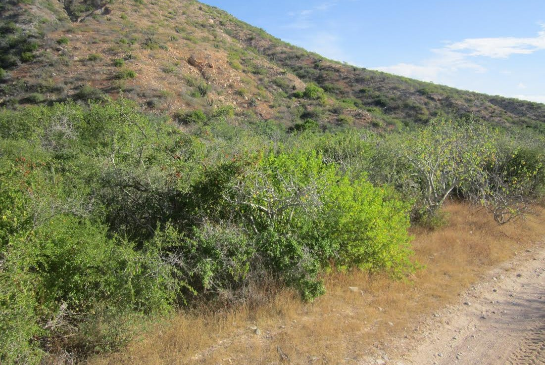 Lots 10-11 Cabo Pulmo Properties